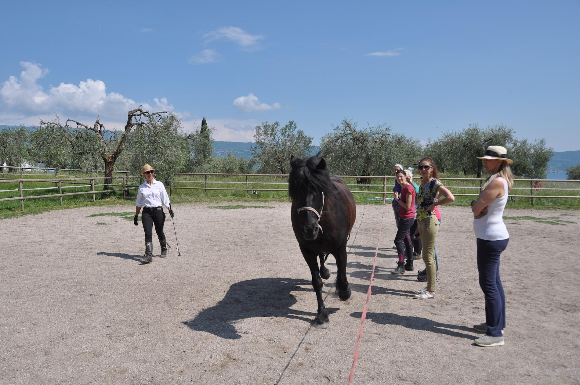 Wenn Pferde uns den Weg weisen