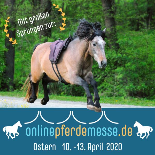 Online Pferdemesse - Raidho ist dabei!